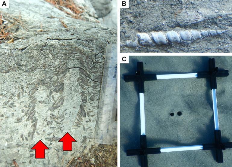 documentazione (paleo)biologica del Ponente ligure